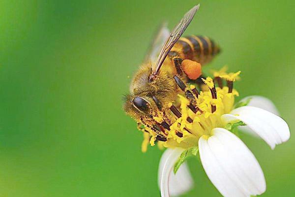 没有任何加工的纯天然原蜂蜜的三大特点